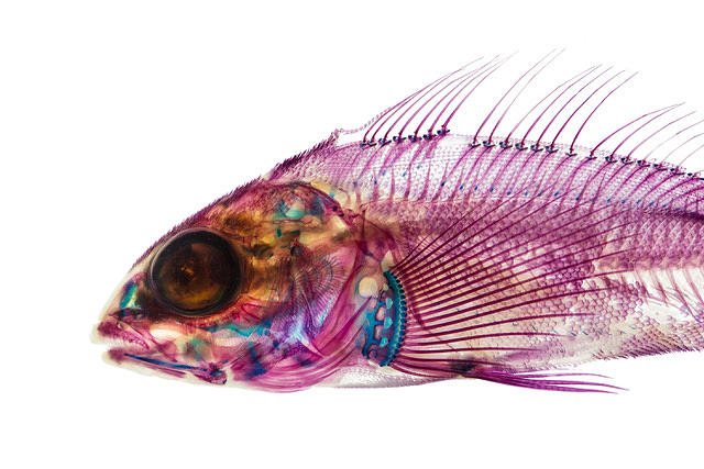 Fish Mixed Media - Electric fish by Adam Summers