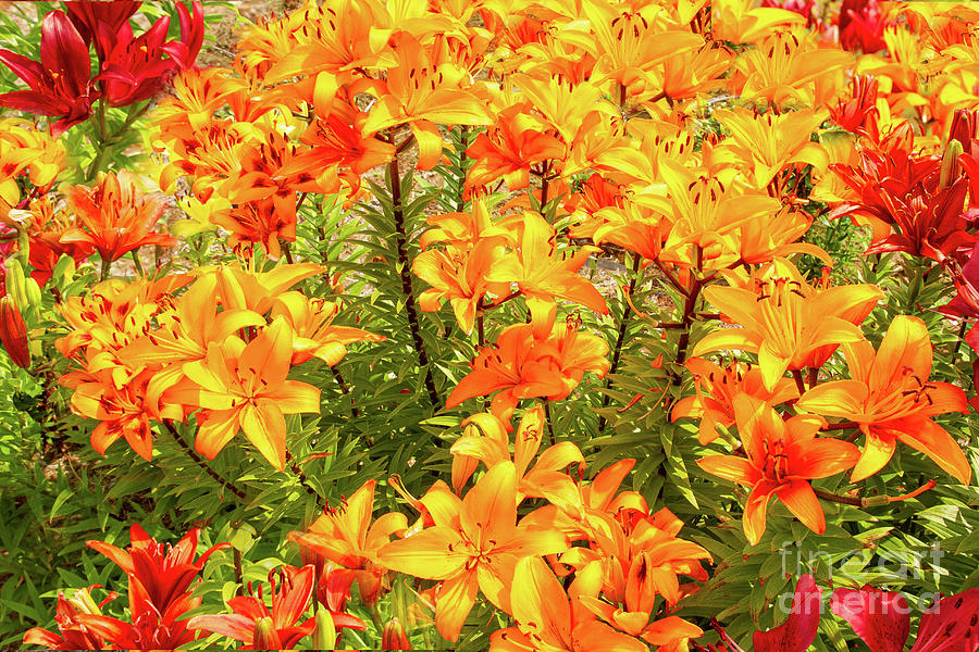 Gardens Photograph - Electric Orange by Marilyn Cornwell