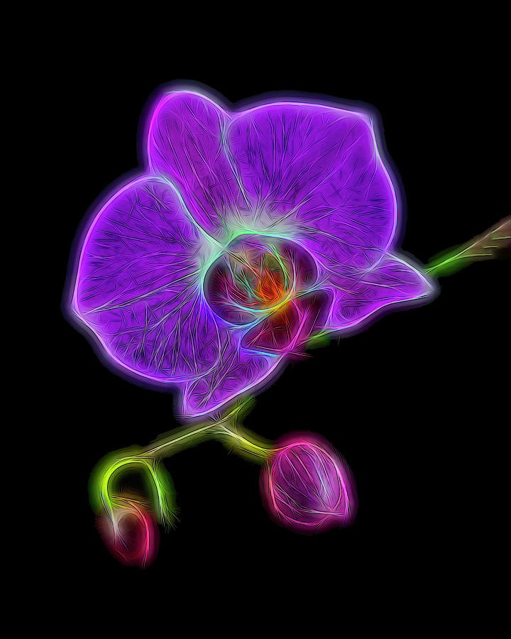 Electric Orchid Photograph