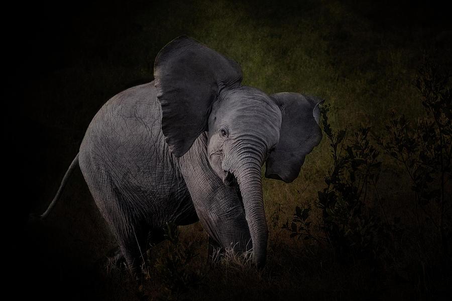 Elephant Calf by Diana Andersen