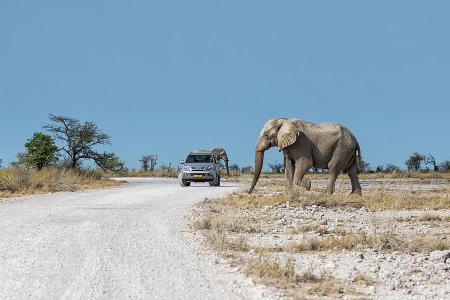 Elephant Crossing by Belinda Greb