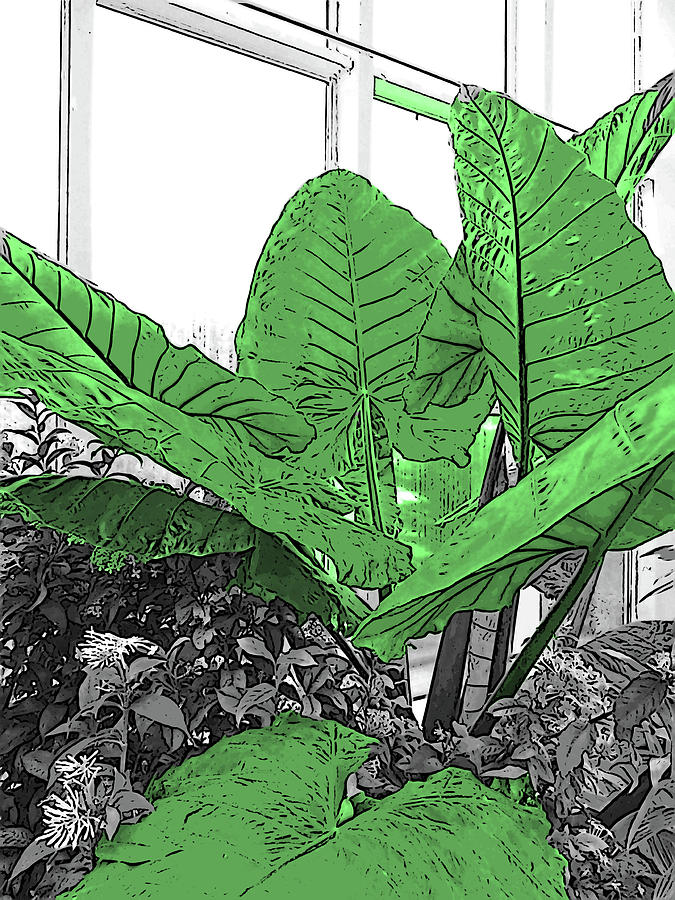 Elephant Ears Plant In Selective Color Digital Art By Marian Bell