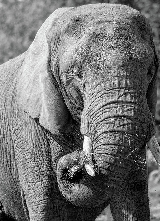 Elephant Eyes by Martin Newman