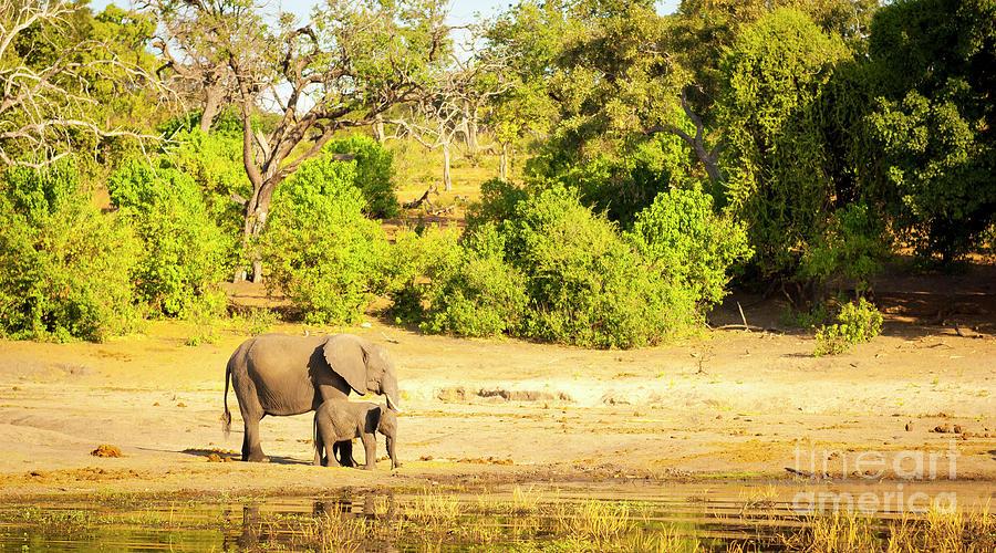Elephant Herd Africa Photograph