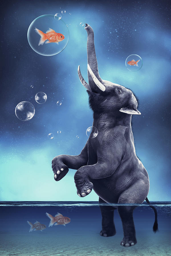 Elephant Playing With Fishes Digital Art