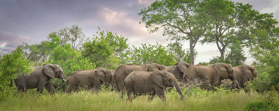 Herd Of Elephants Photograph - Elephant Walk by Rebecca Herranen