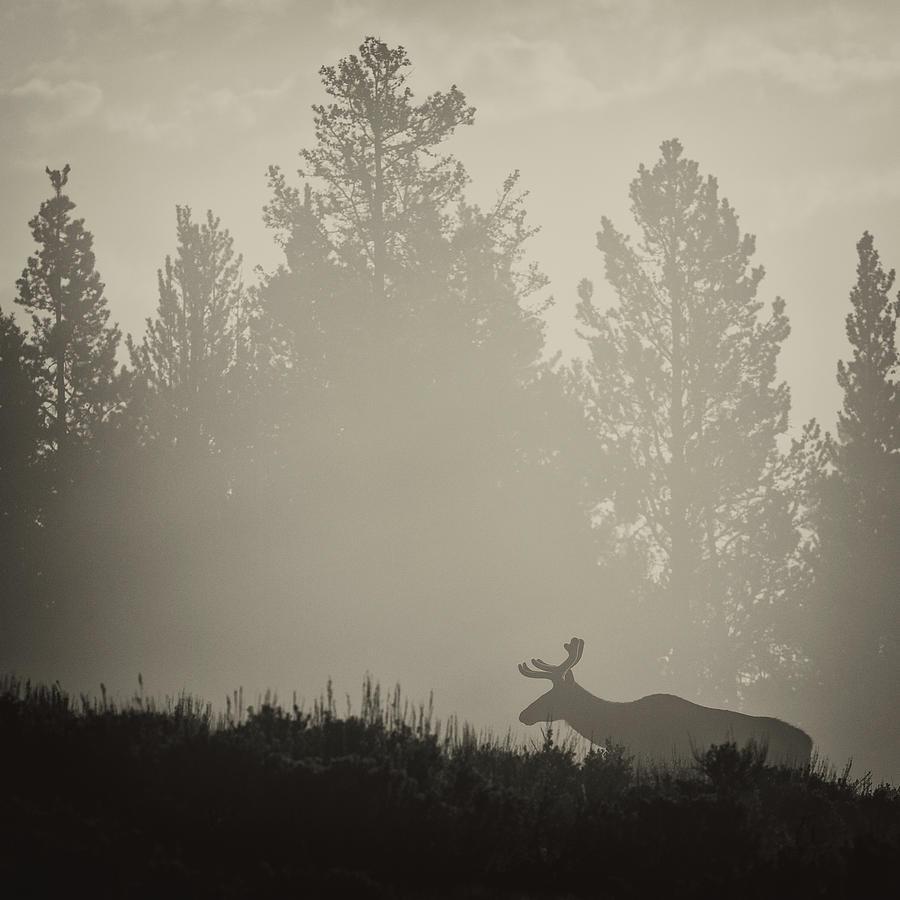 Elk in Fog by Max Waugh