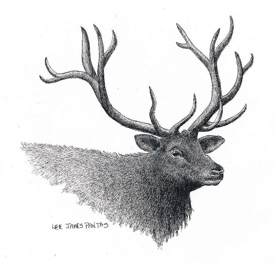 Elk Drawing - Elk by Lee Pantas
