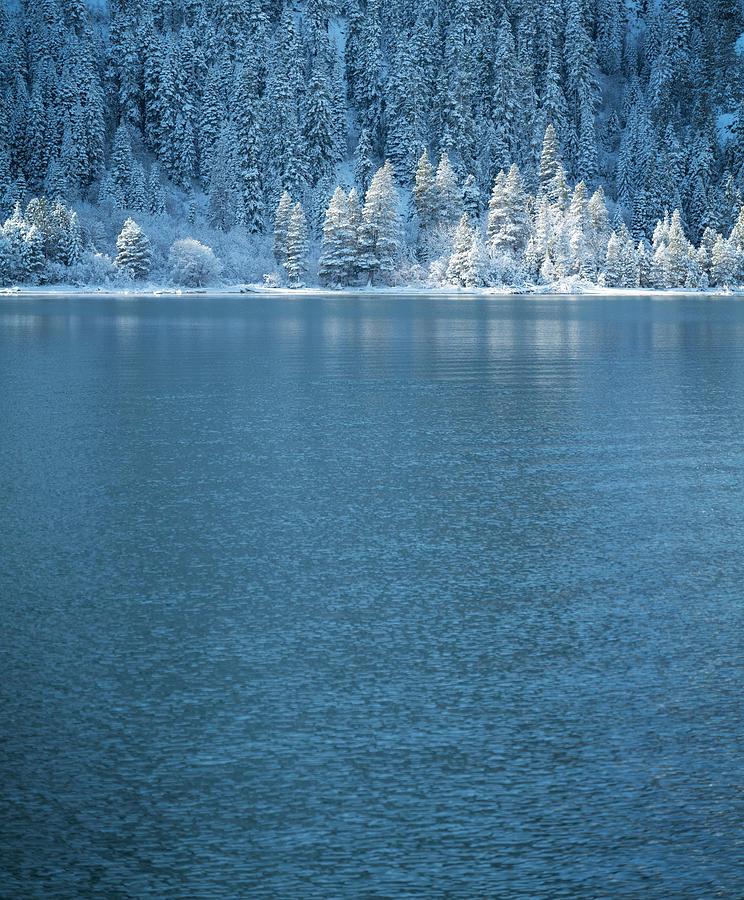 Emerald Bay Frozen Trees By Brad Scott Photograph