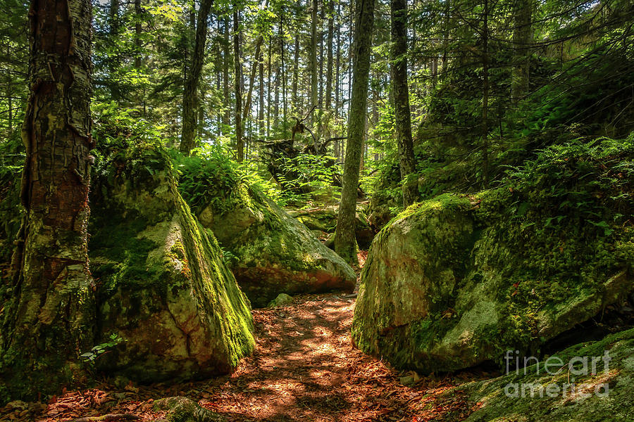 Emerald Forest Photograph