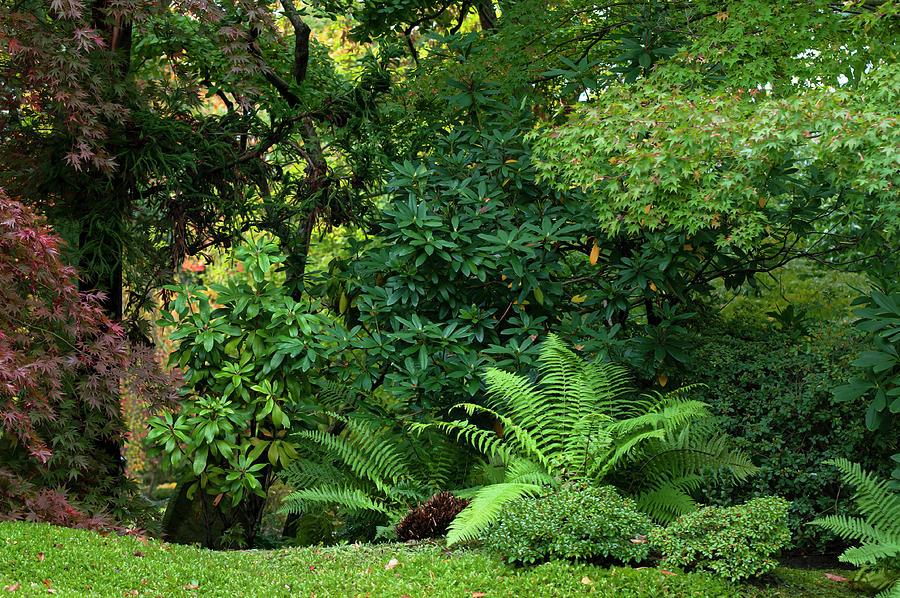 Emerald Greens in Japanese Garden by Jenny Rainbow