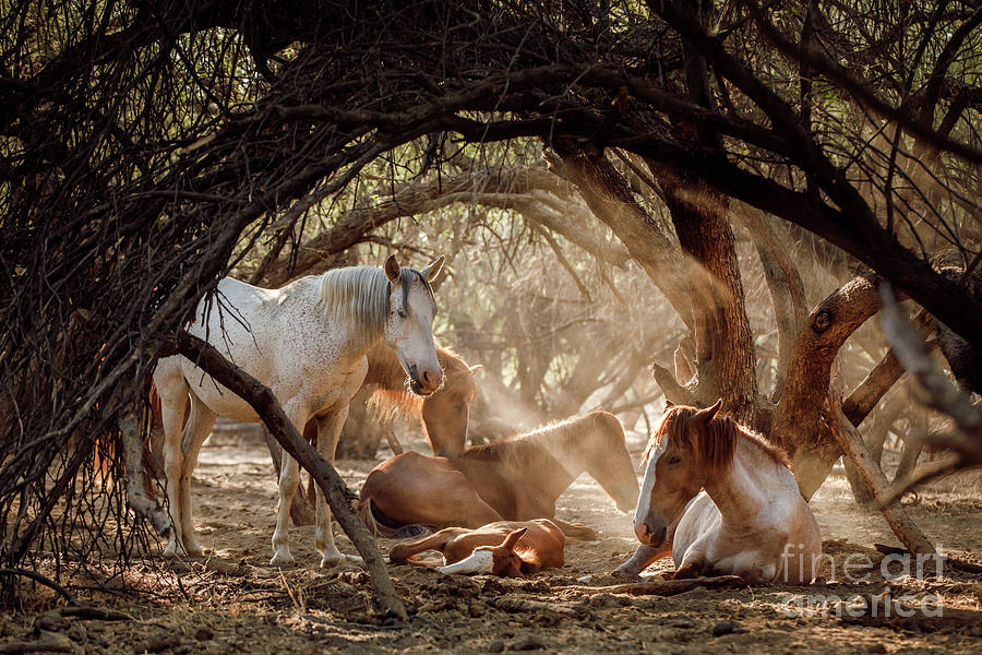 Horse Photograph - Enchanted Forest by Shelley Paulson