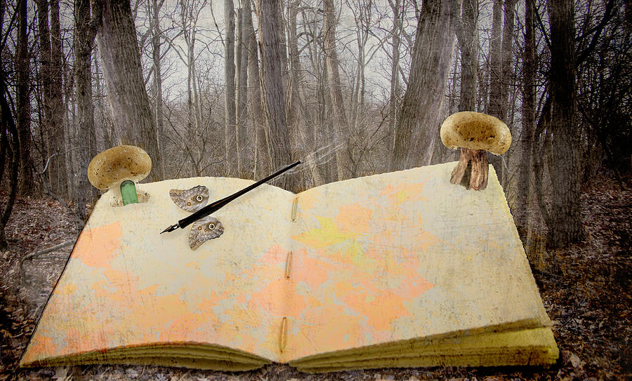 Enchanted Forest Story Book Photograph