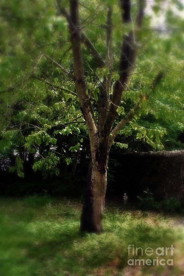 Enchanted Tree by Doc Braham