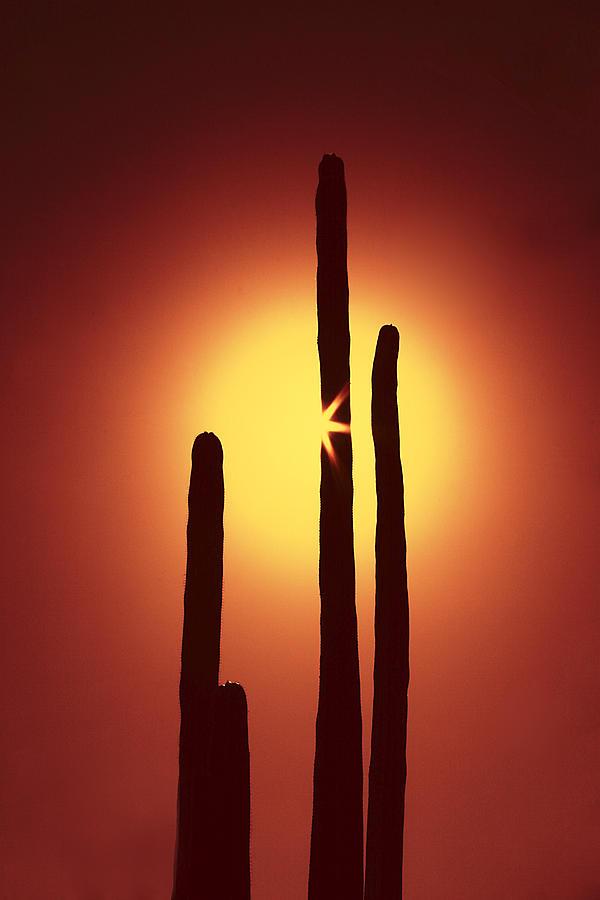 Sun Photograph - Encinitas Cactus by Andre Aleksis