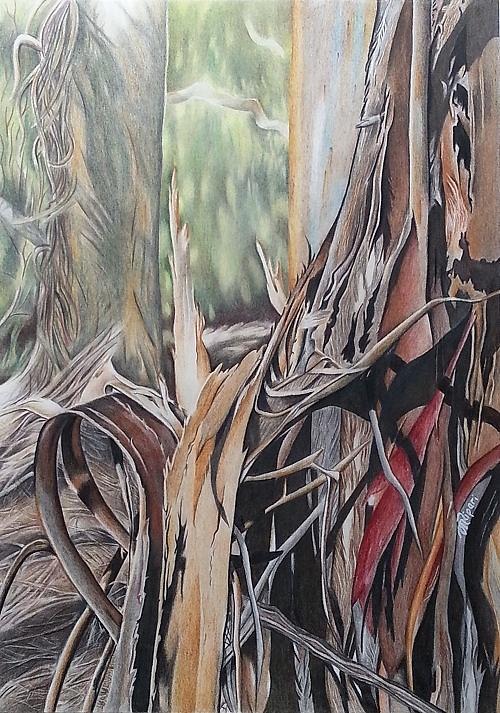 Gum Tree Drawing - Enduring Stillness by Michelle Ripari
