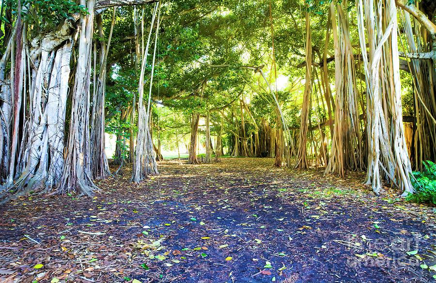 Enlightenment Photograph - Enlightenment, Sunset Inside Banyan Tree Wood by Felix Lai