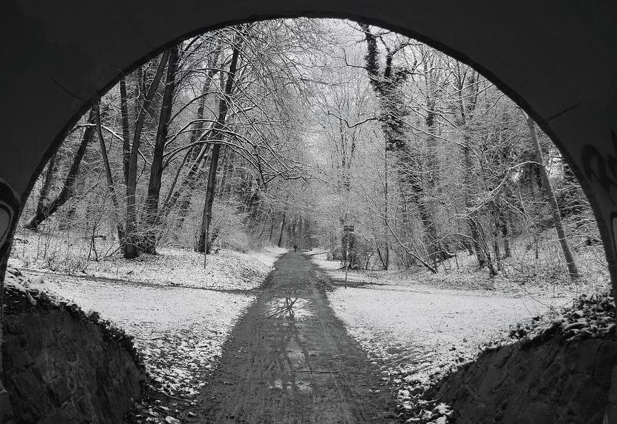 Entrance To A Winter Wonderland Photograph
