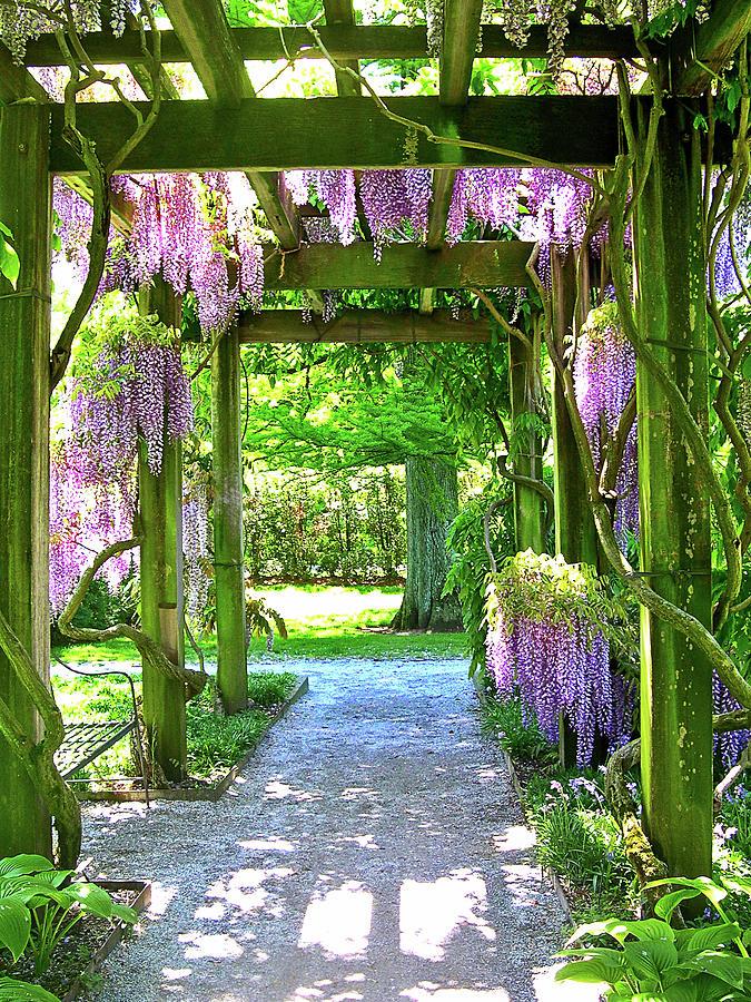 Entranceway To Fantasyland Photograph