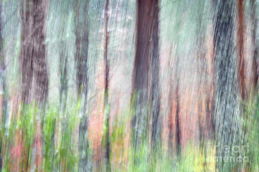 Ephemeral forest in fall by Hernan Bua
