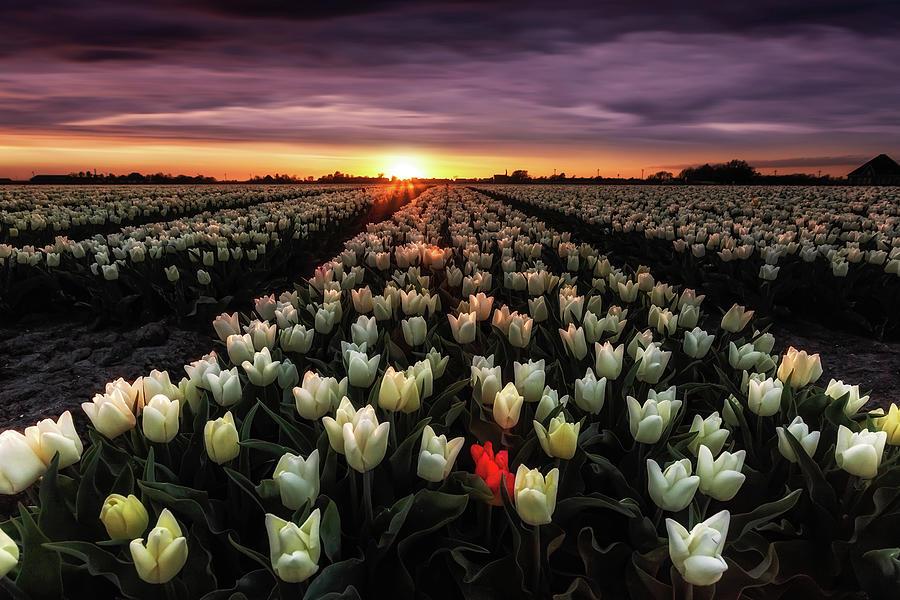 Eternal Sunshine Photograph