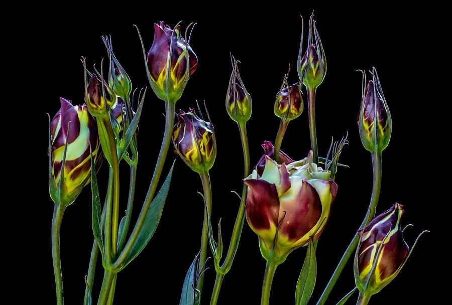 Ethereal Purple Tulips Painting