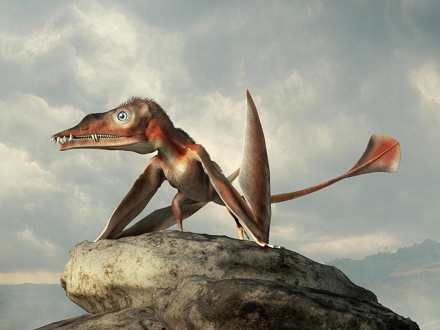Eudimorphodon Digital Art