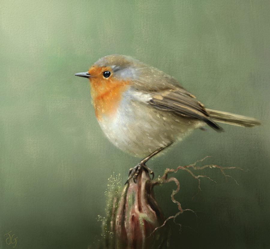 European Robin Redbreast by Joe Gilronan