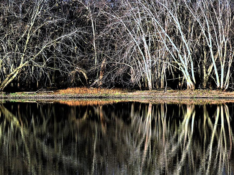 Evening Pond Reflections  by Lori Frisch