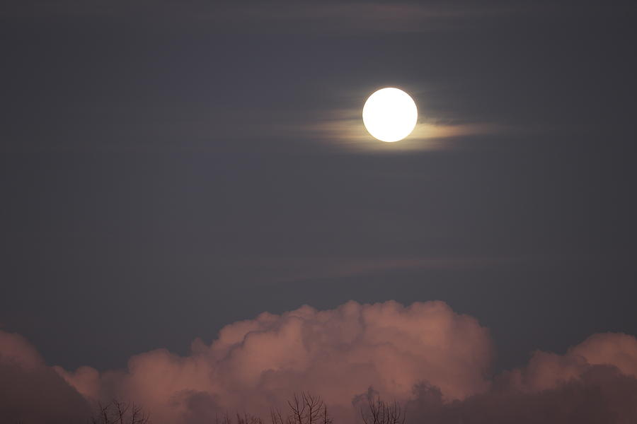Everglades Moon Rising by Blair Damson