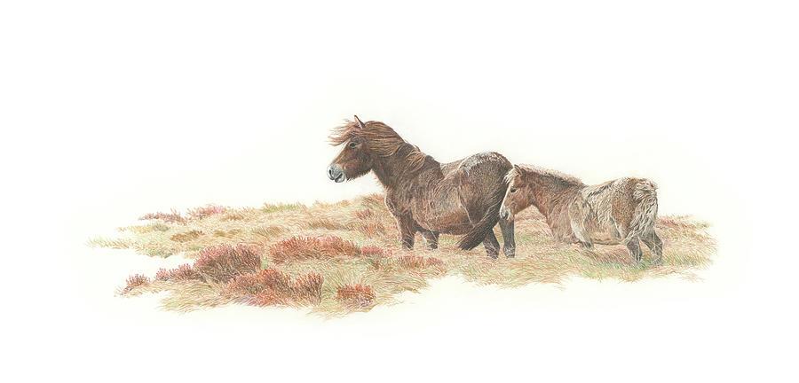 Exmoor Drawing - Exmoor Mare and Foal by Mark Langley