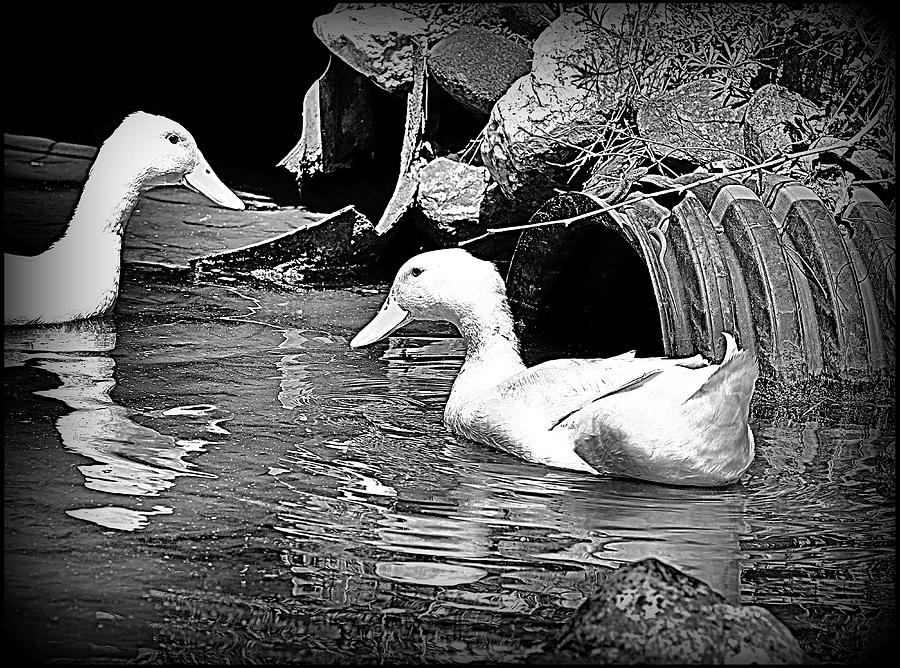 Exploring The Duck Pond Mixed Media
