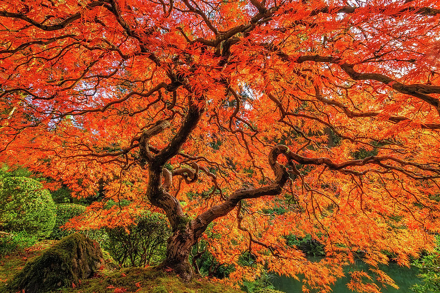 An Explosion Of Color Photograph