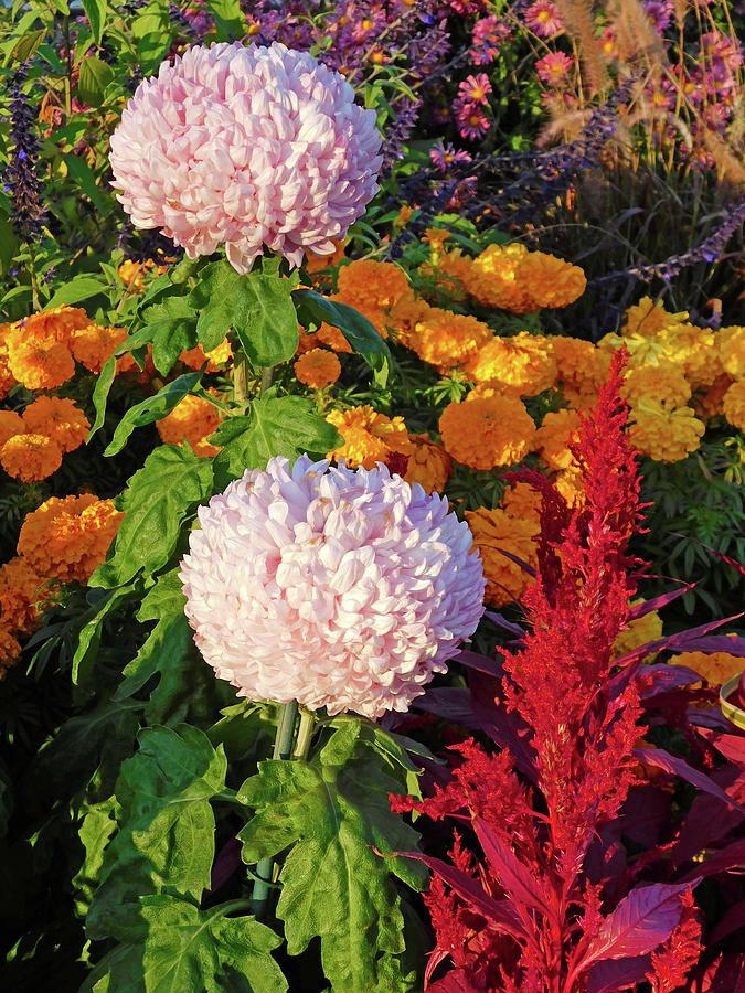 Exquisite Flowers Photograph