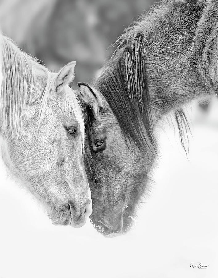 Eye To Eye by Phyllis Burchett