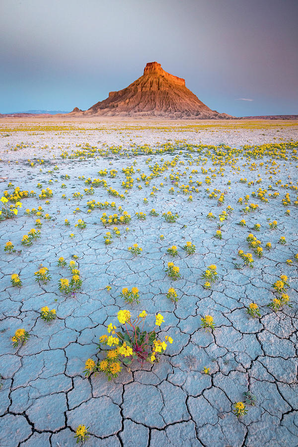 Factory Butte Dawn Wildflowers Photograph