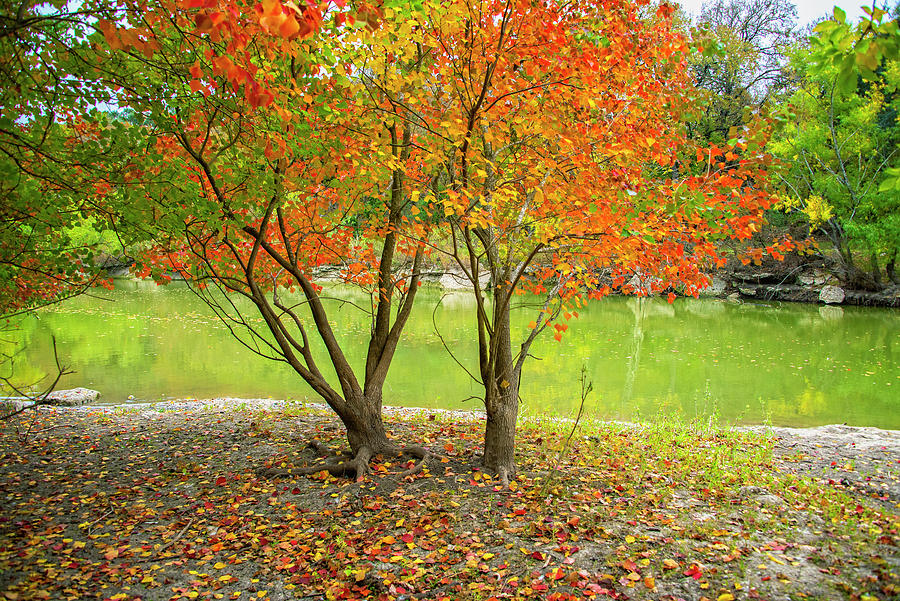 Texas Hill Country Photograph - Fall Color at the Creek by Lynn Bauer