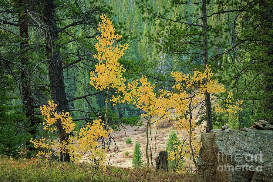 Fall Color Near Crested Butte, Colorado, Usa Photograph