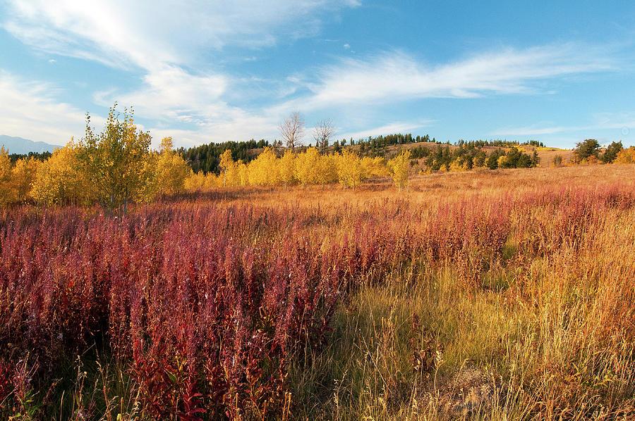 Fall Color On Shadow Mountain Photograph