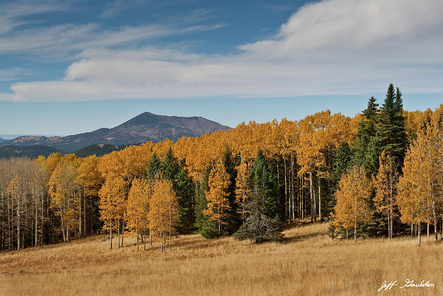 Fall Colored Aspens on Hart Prairie by Jeff Goulden