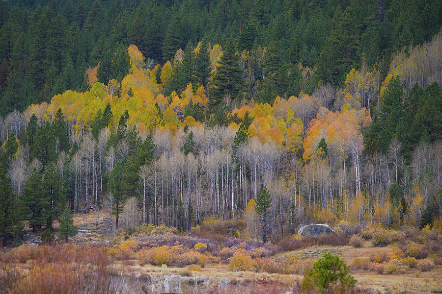 Fall Colors at Hope Valley by Jonathan Hansen
