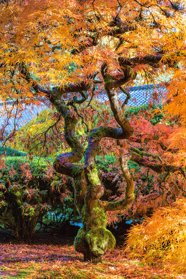Fall Colors at Portland Gardens by Mike Centioli