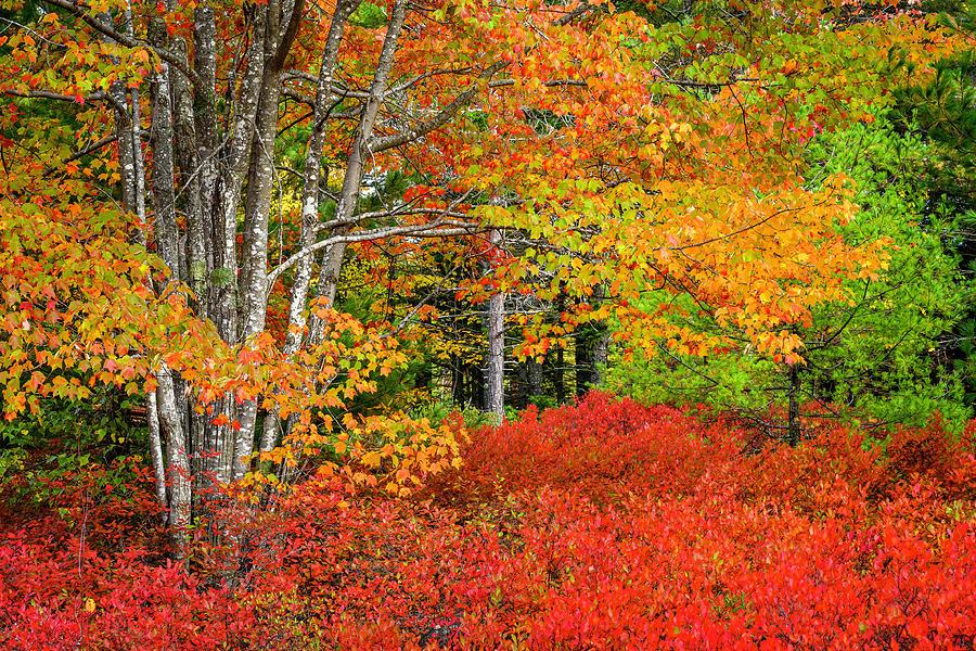 Arcadia Photograph - Fall Colors In Arcadia by David Macdonald