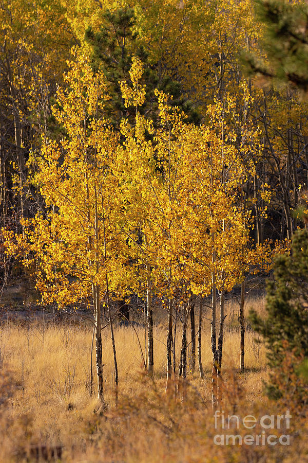 Fall Colors In The Rockies Photograph