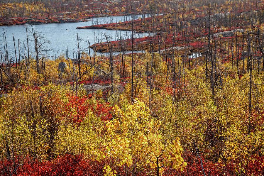 Fall Colours At Flat Lake by Irwin Barrett