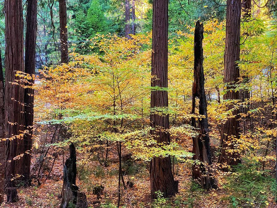 Fall Dogwood by Steph Gabler