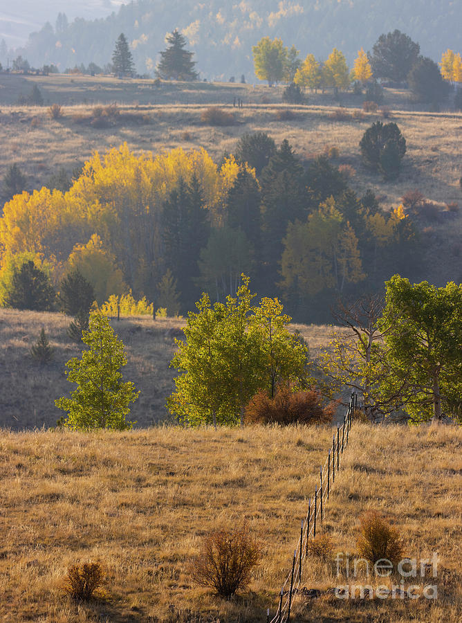 Fall Fence In The Rockies Photograph