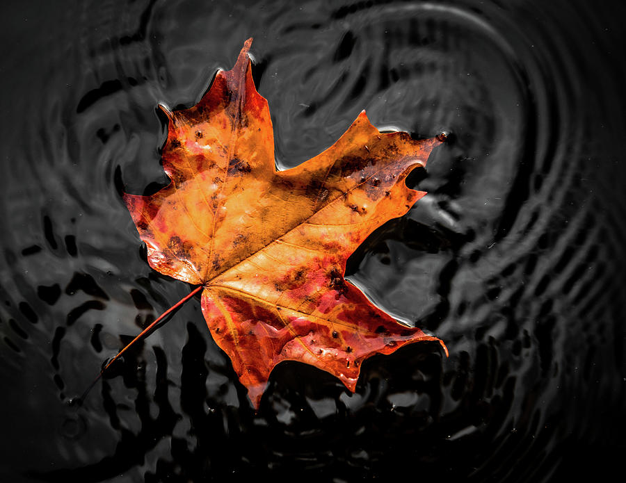 Fall Floating Leaf by Tim Kirchoff