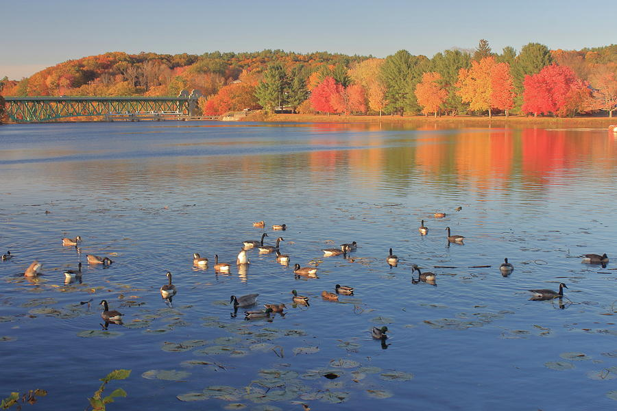 Fall Foliage and Waterfowl on the Connecticut River by John Burk