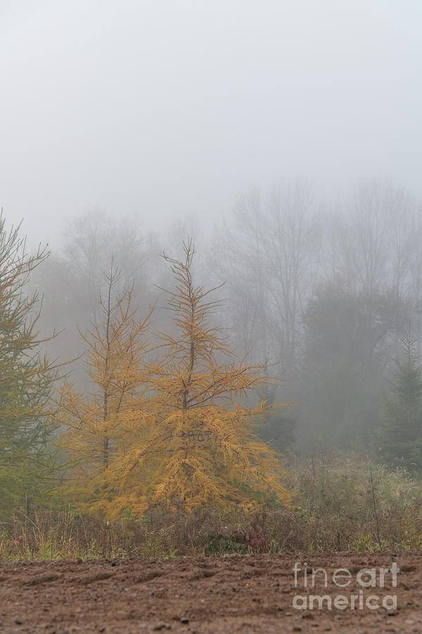 Fall Foliage in the Fog by Amfmgirl Photography